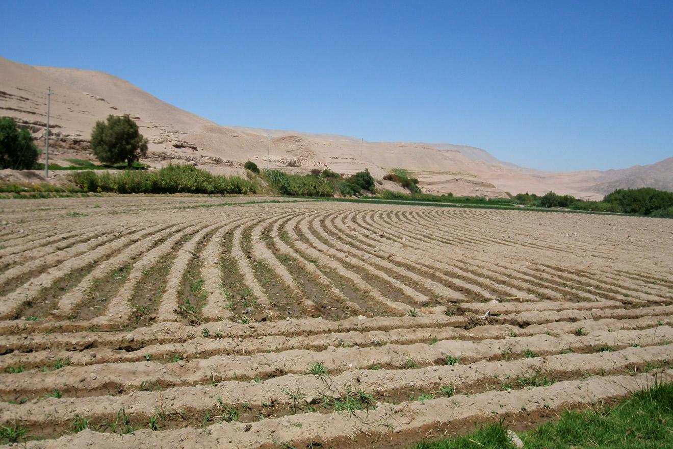 Agricultores reducen su preproducción por falta de lluvias