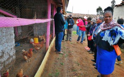 Familias usuarias de Haku Wiñay muestran sus progresos a delegación de Gobierno Sudafricano