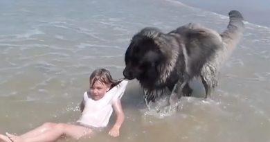 Perrito rescata a una niña de ser arrastrada por las olas en Francia (VIDEO)