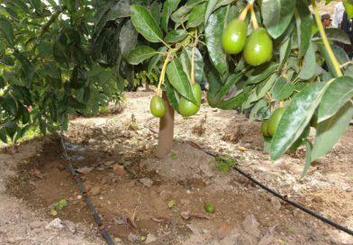 Casa Nuestra implementará riego tecnificado y capacitará a agricultores de Torata.